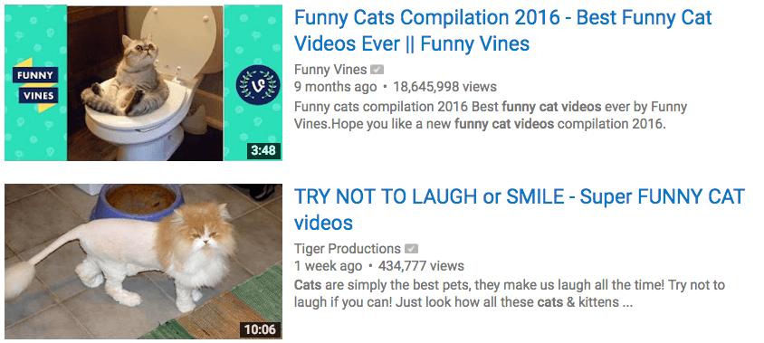 funny-cat-videos